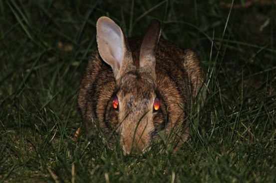 evil-bunny-rabbit-animal-image-public-domain-pixabay