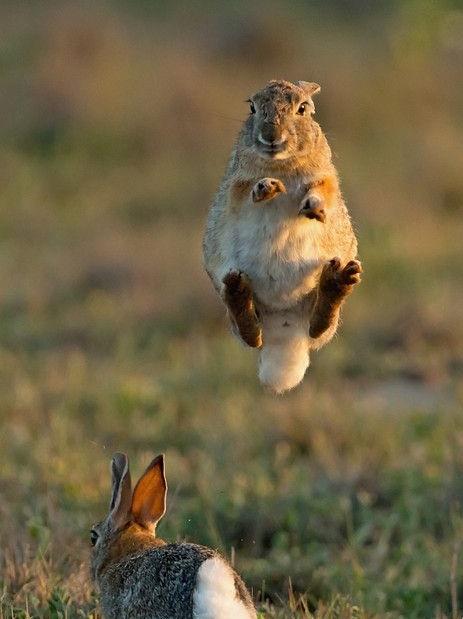bunny jumping.jpg